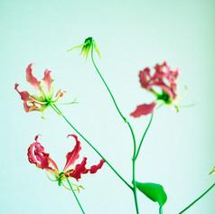 赤い花弁.jpg