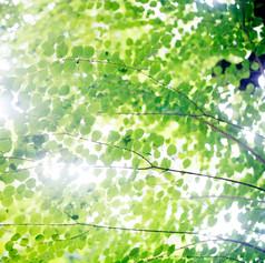 光の木立.jpg
