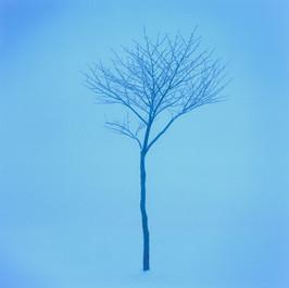 雪の樹.jpg