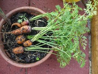 Wintertime Gardening Part I: 5 Easiest Edible Plants to Grow Indoors