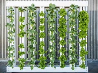 Wintertime Gardening Part III: Creating the Perfect Indoor Space
