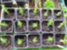 Foster Plant Program