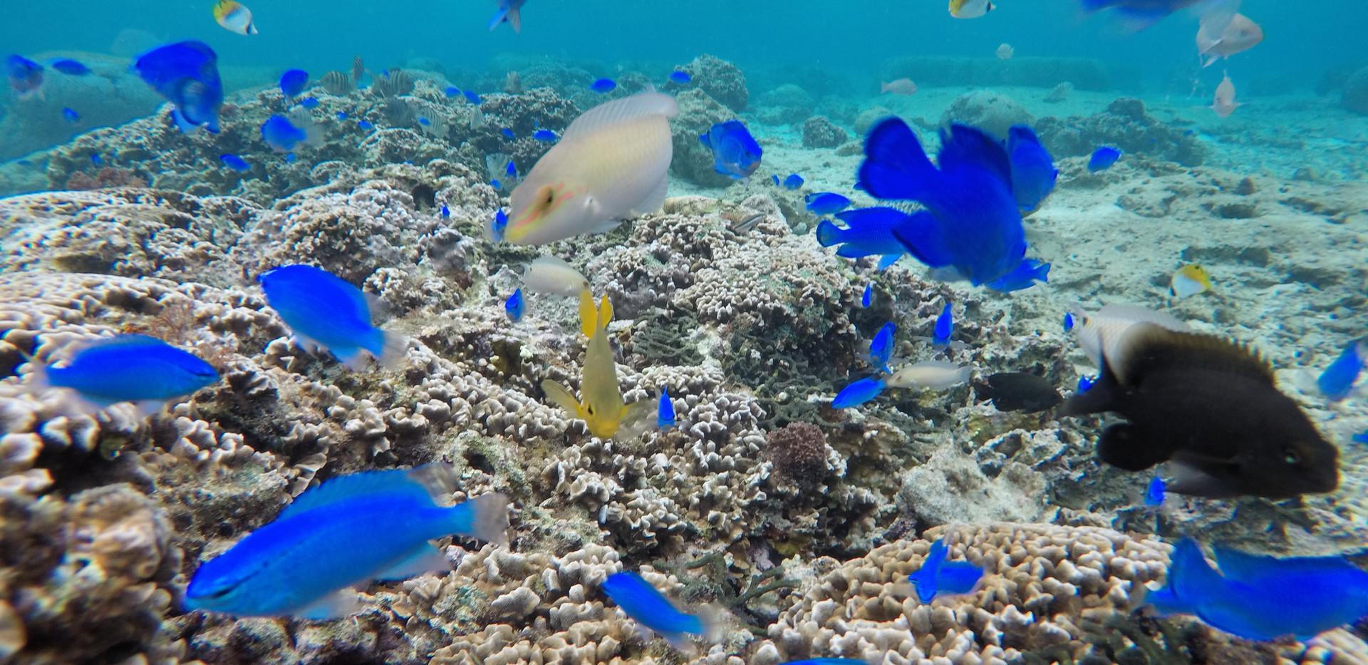 色鮮やかなお魚達