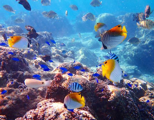 沖縄ビーチコース、カラフルなお魚が沢山