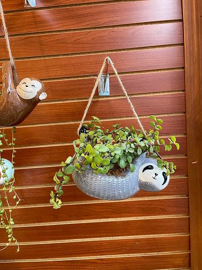 Hanging Sloth Garden