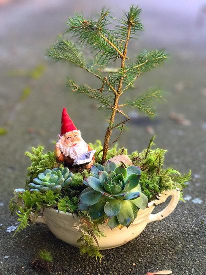 Macklewood Attis Pine Bonsai Garden