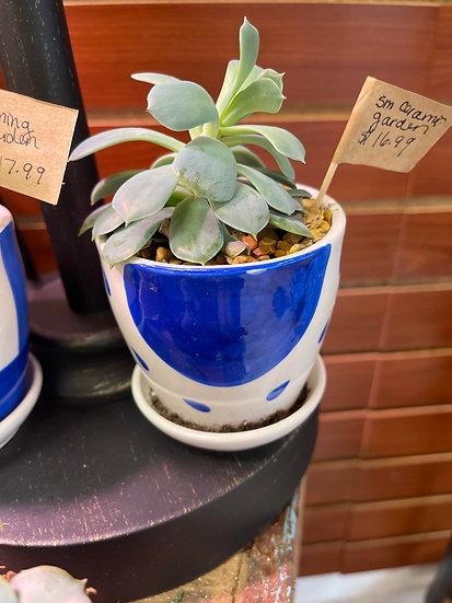 Small Ceramic Garden