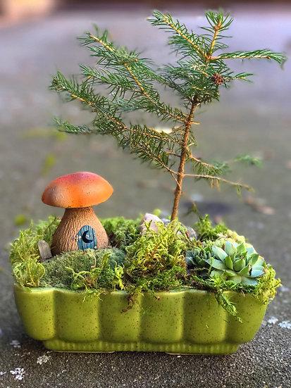 Pinehaven Attis pine bonsai garden
