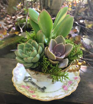 vintage succulent tea garden