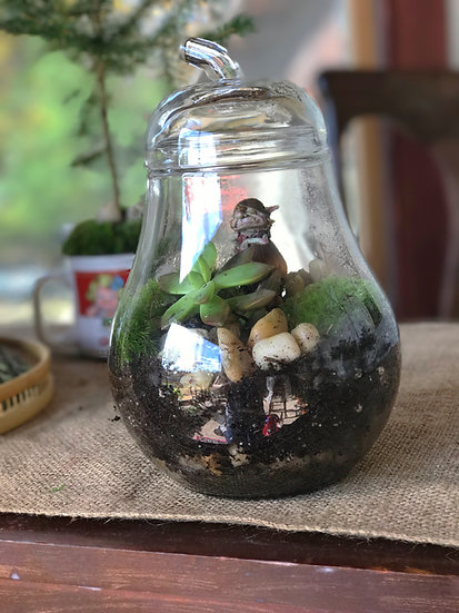 Nimble the Guardian terrarium