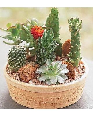 Cactus Dish Gardens