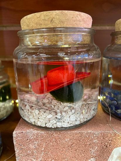 Moss Amigos Aqua Terrariums
