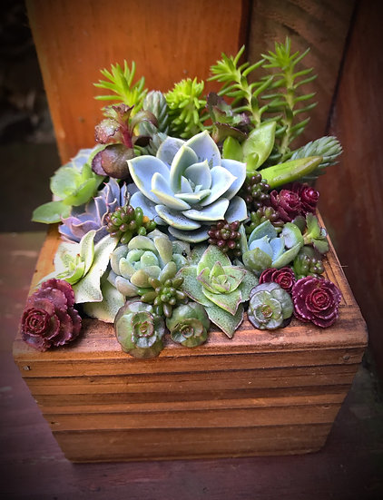 Earth Day succulent box