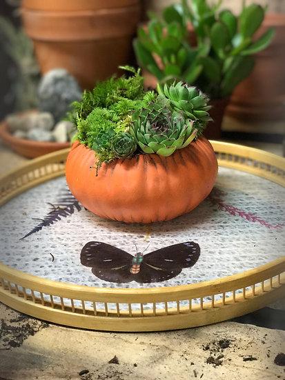 ~ Fall Harvest~