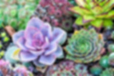succulents color.jpg