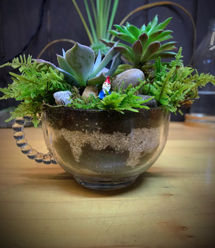 Winston glass tea succulent garden