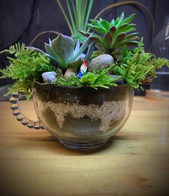 Winston glass tea succulent garden