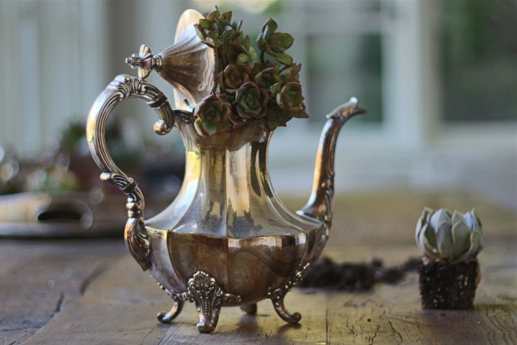 Tarnished Tea Gardens