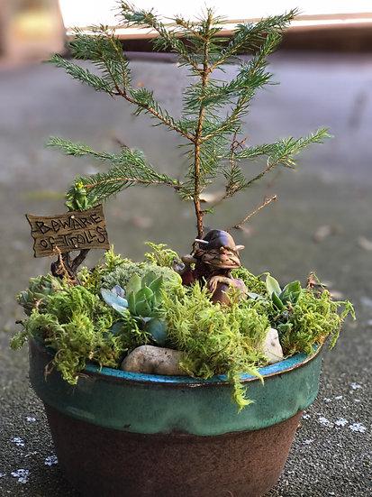 Quentin Attis Pine Garden