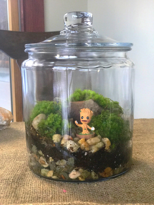 ... Being That Has The Appearance Of A Tree Is Groot. Here He Sits In His  Own Little Echo System In A Vessel All His Own. This Terrarium Is Filled  With Life ...