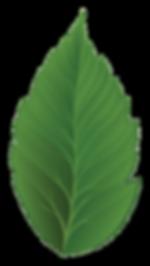 Tema Vakfı Logo Yaprak