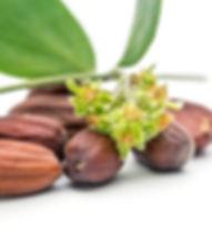 Nature's Sentry Organic CBD Massage Oils, made with organic jojoba oil