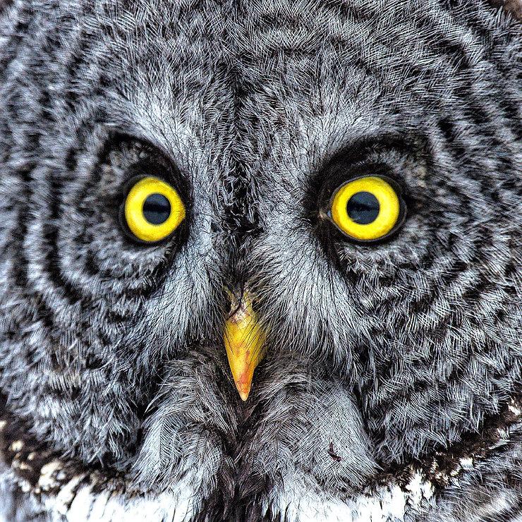 Owl-eyes-closeup-300dpi copy.jpg