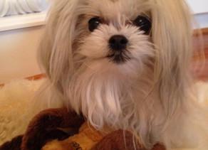 Praise Report: God Healed My Puppy