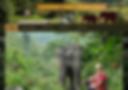 Elephantsteps Chiang Rai