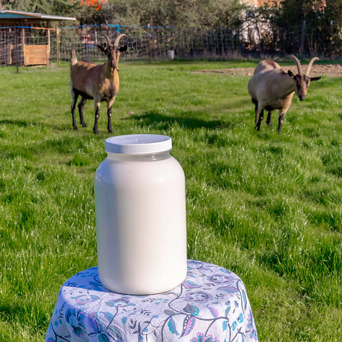Goat Milk Yogurt - Gogurt (16 oz. jar)