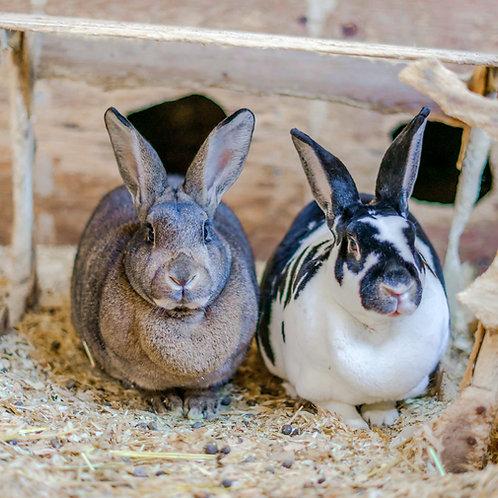 Whole Rabbit ($10/ lb.)