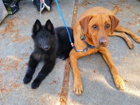 Rusty & Baby Tula!