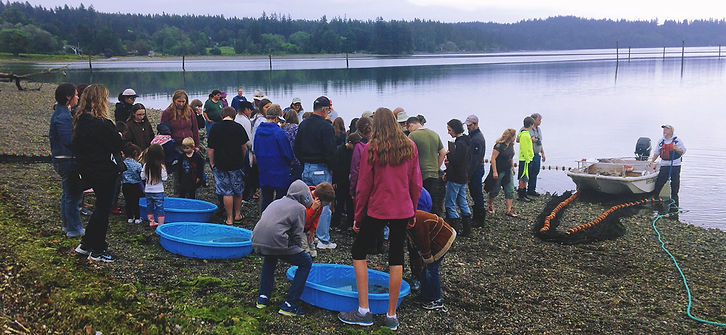 Beach Seines with volunteers on the Dyes Inlet