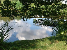 pond and wildlife