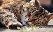 Une bonne relaxation soulage les nausées et vomissements. Le gingembre contenu dans Novalib aussi.