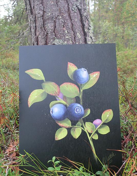 Mustikka2-metsassa.jpg