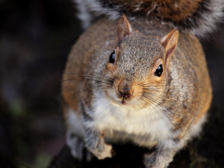 5 unsuspecting animals that can cause a short-circuit