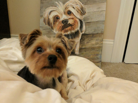The beginning of a pet portrait business