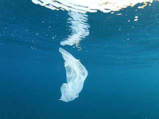 23 reasons to ditch single use plastic bags