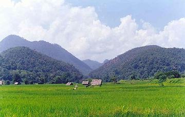 Karen story paddy fields.jpg