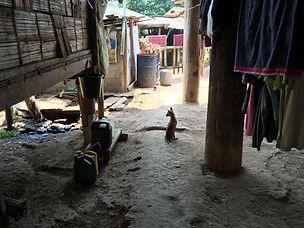 Dog in Village.jpg