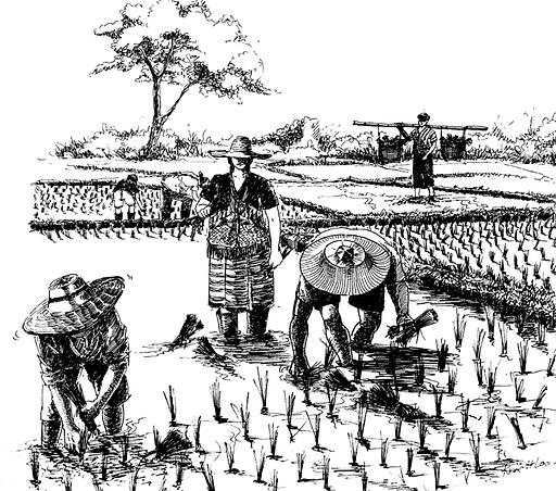 Karen line drawing planting rice.png
