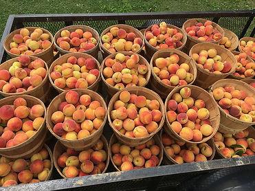 peach wagon.jpg