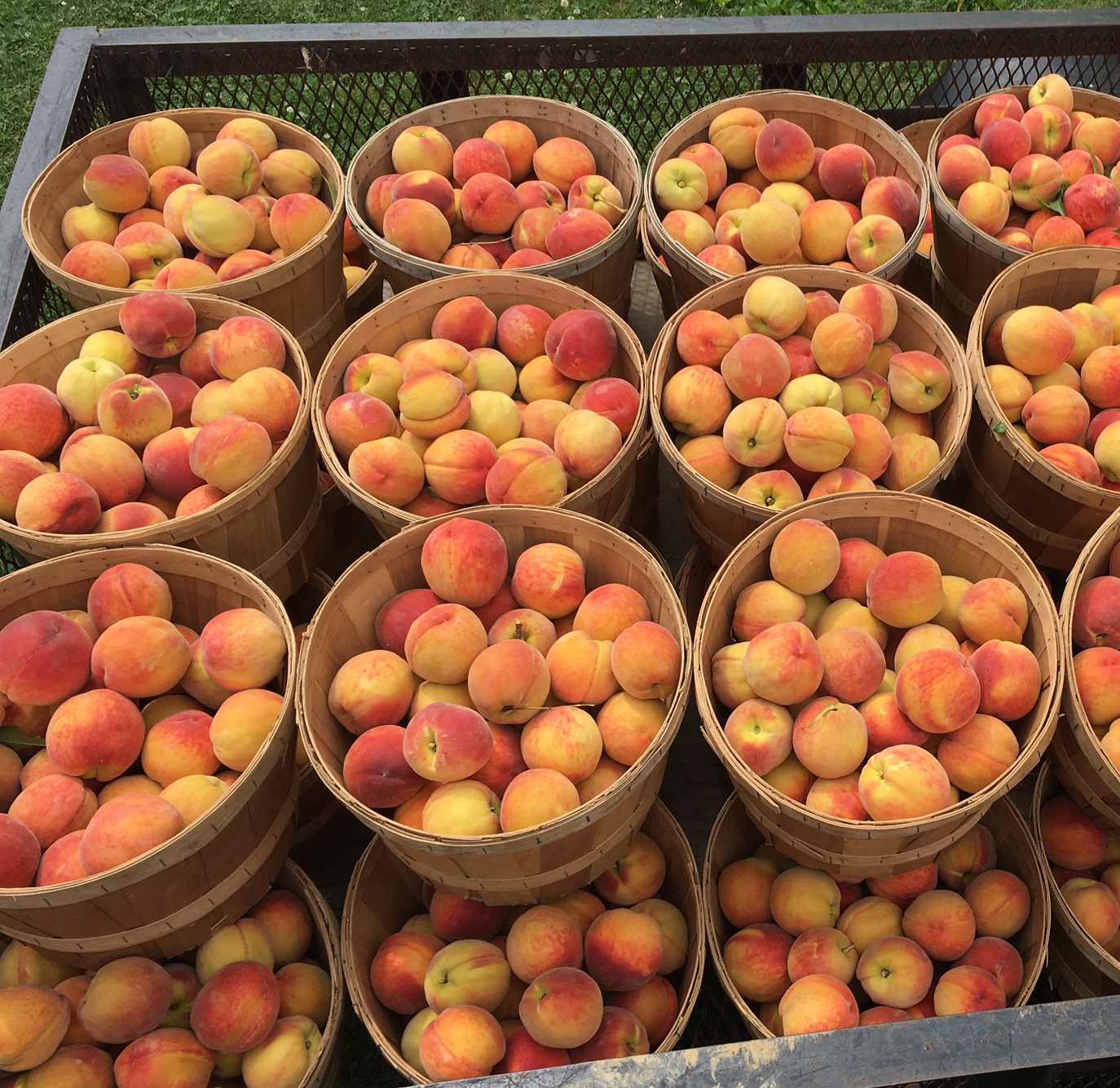 Peaches at our farm market