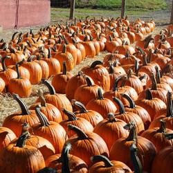 Our own pumpkins
