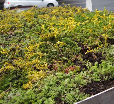 Philly-Bus-Green-Roof-8.jpg