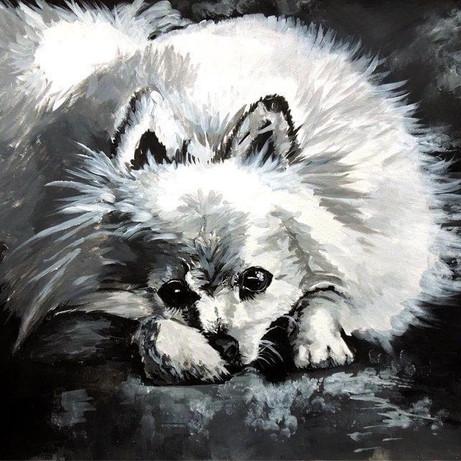 """Pomeranian Puppy"""