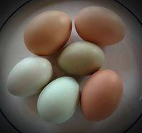 EggsVignette.jpg