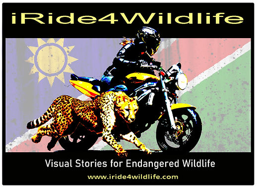 2020 irdie4wildlife logo Oct2019.jpg