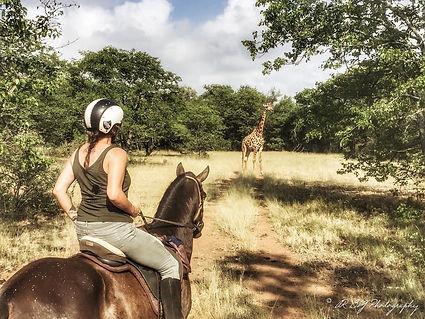 Giraffe 2A & L.jpg